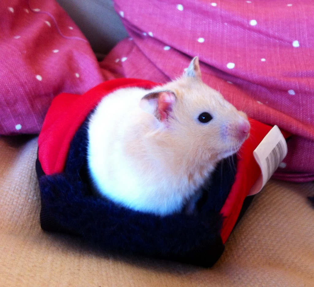 A white hamster sitting on a glove on a table